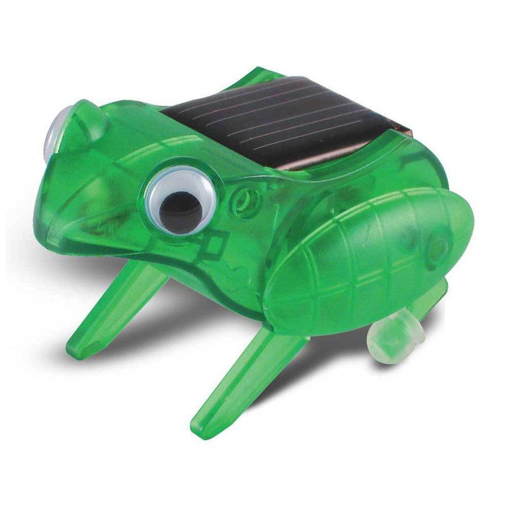Happy Hopping Frog